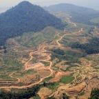 peran HUKUM (pemerintah) dalam perkembangan konstruksi kayu di Indonesia